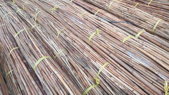 Natural Rattan And Its Eco-Friendly